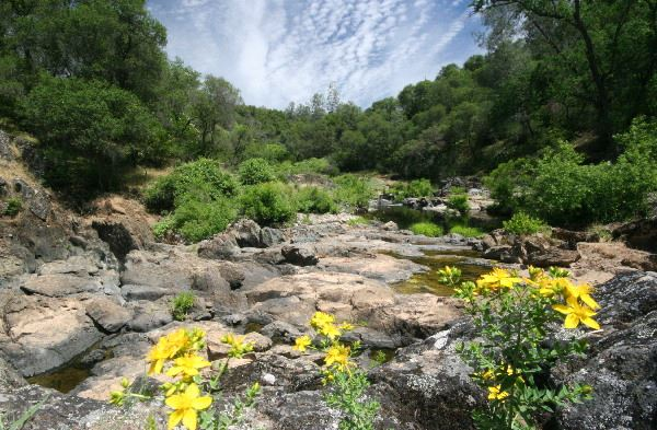 Rocky Stream with Yellow Flowers and Trees All Around